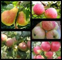 Набор Груши+Яблоки