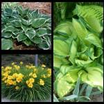 Набор растений 8