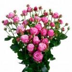 Роза спрей Джали