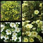 Набор растений 19