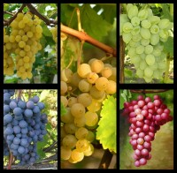 Набор Виноград