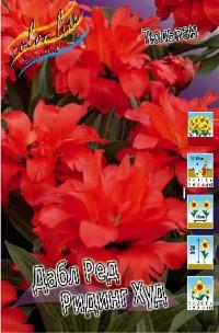 Тюльпан Дабл Ред Ридинг Худ