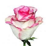 Роза Соверейн