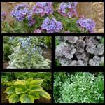 Набор растений 4