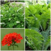 Набор растений 9