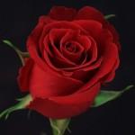 Роза Девонжи