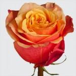 """Роза """"Черри бренди"""""""