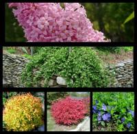 Набор растений 5