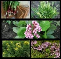 Набор растений 6