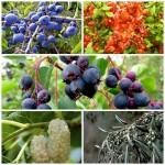 Набор Плодовые 1