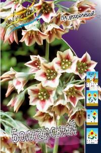 Лук дек. Болгарский (nectaroscordum)