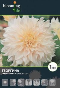 "Георгина ""Кафе о Лэ"""