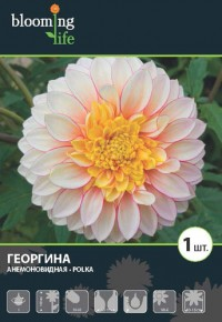 """Георгина """"Полька"""""""