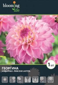 """Георгина """"Принцесс Латита"""""""