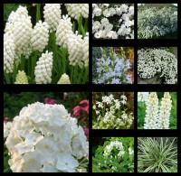 Набор растений Белый