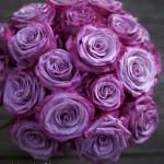 Роза Муди Блю