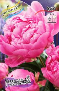 Пион пинк (розовый)