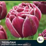 Тюльпан Дрим Тач