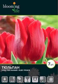 Тюльпан Руби принц