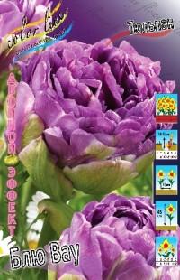 Тюльпан Блю Вау