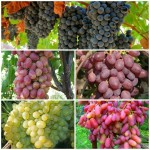 Набор Виноград 2