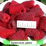 """Малина """"Брянское диво"""" рем.  набор"""
