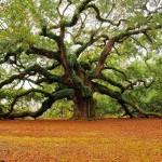Подари человеку дерево