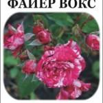 Роза Файер Вокс