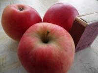 Яблоня Геврая