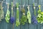 Пряно-вкусовые травы