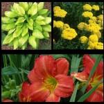 Набор растений 13