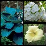 Набор растений 12