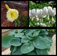 Набор растений 11