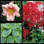 Набор растений 10