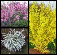 Набор весенне-цветущий