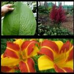 Набор растений 15