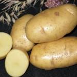 Картофель Каратоп (ранний) 2.5 кг