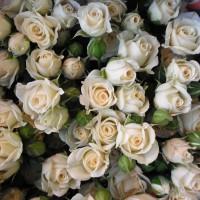 Роза Уайт Лидия
