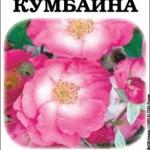 Роза Кумбайна