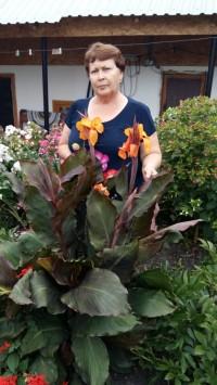 Канна краснолистная с оранжевыми цветами
