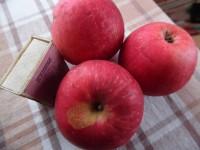 Яблоня Лара